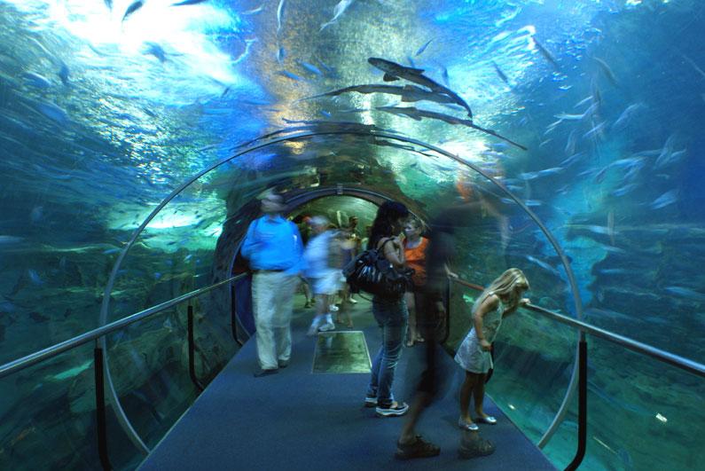 Spagna '08, San Sebastian, acquario