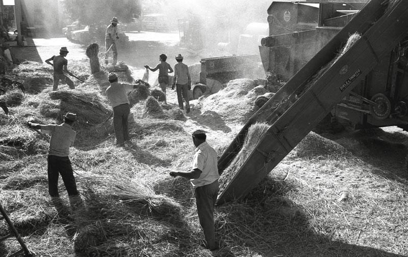 Puglia, Trebbia '79