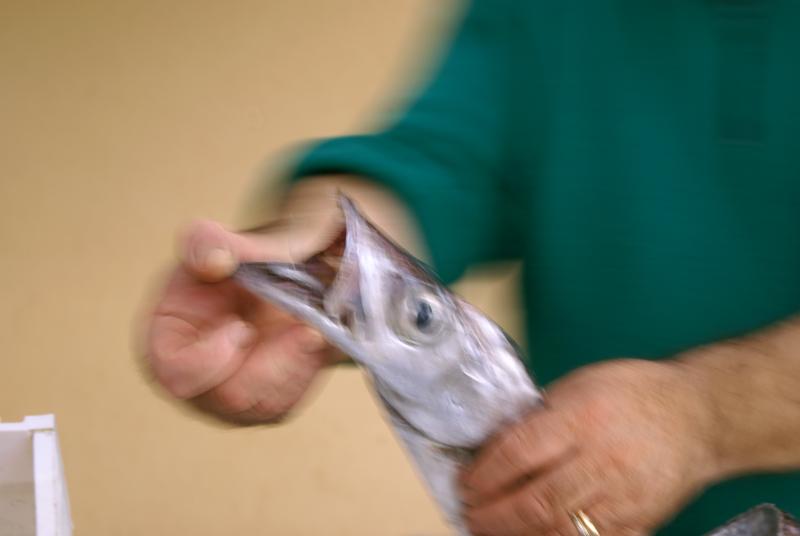 Marsala, mercato del pesce