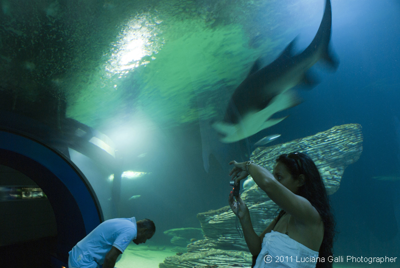 Parco Oceanografico universale di F.Candela