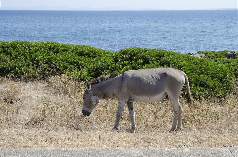 15.Asinara